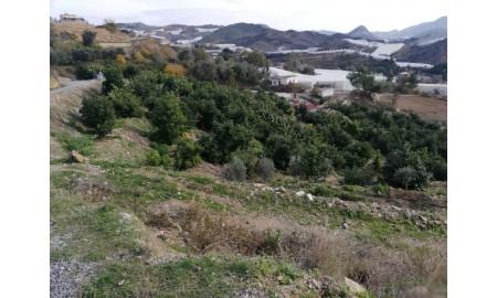 Alanya Yeşilöz'de Satılık Avokado Bahçesi
